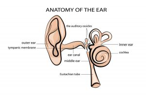 natural remedies for earache