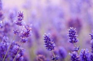 essential oils for mental health