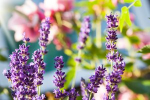 essential oils for the immune system