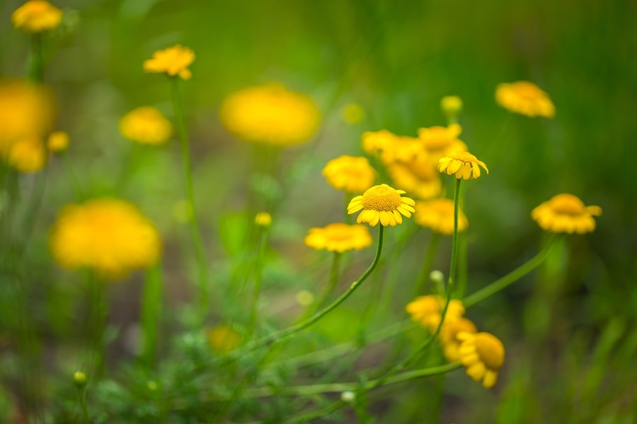 10 easiest herbs to grow