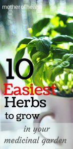 easiest herbs to grow in your medicinal garden