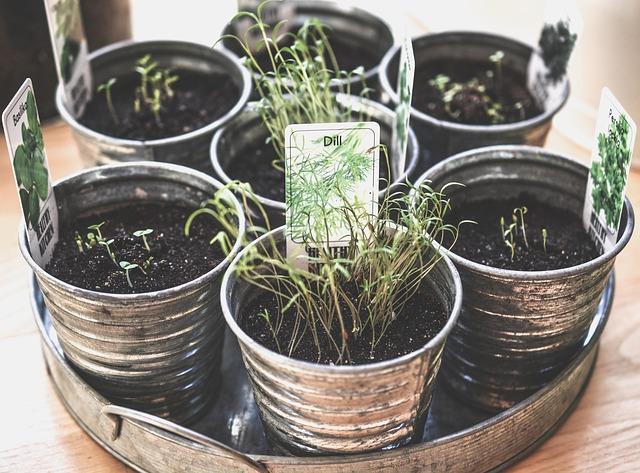 how to grow herbs inside