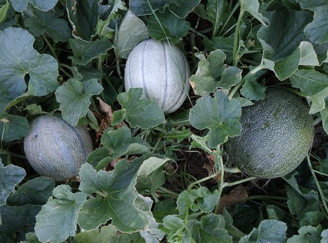 10 easiest vegetables to grow in your garden