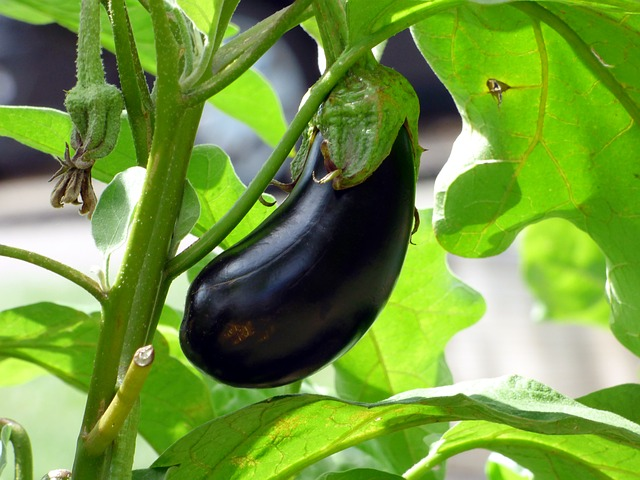 best vegetables to grow in containers