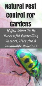 natural pest control for gardens