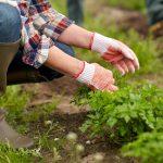 how to make organic weed killer