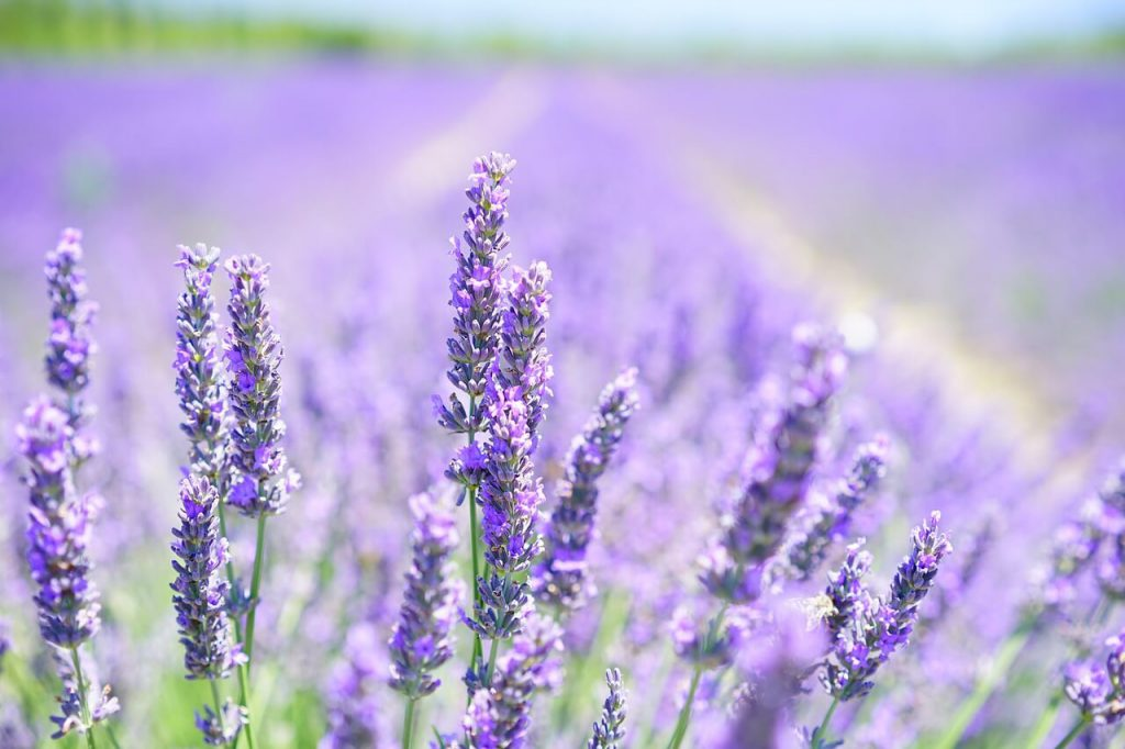 essential oils for anxiety and panic attacks