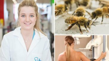 bee venom kills breat cancer cells, Venom from honeybees KILLS breast cancer cells