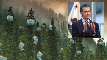 Governor Newsom orders all trees to mask up to prevent spread of wildfires in California