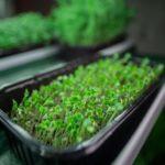 vegetable growing kits