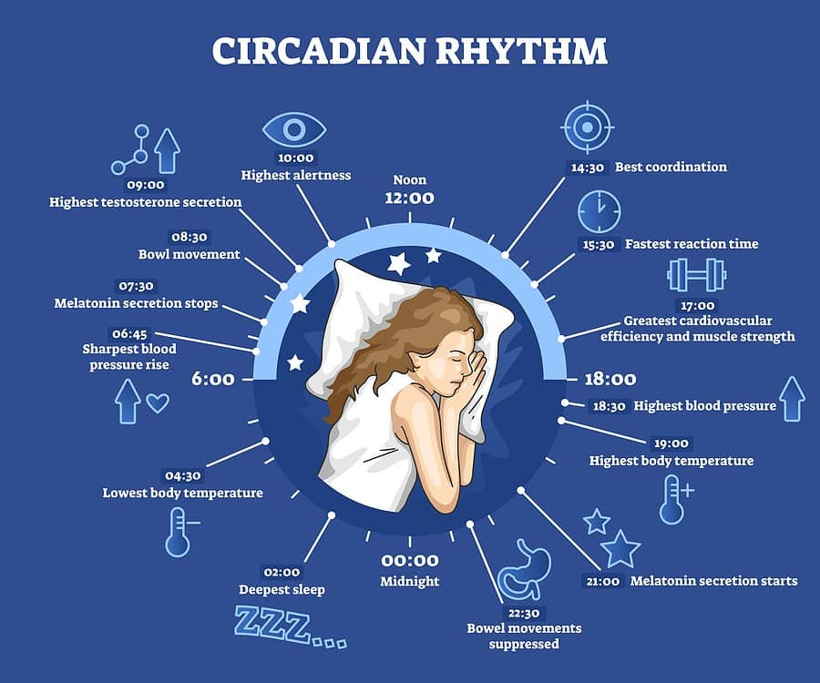what is your circadian rhythm