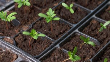 how to grow plants from seed